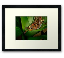 Checking out the Greenery Framed Print
