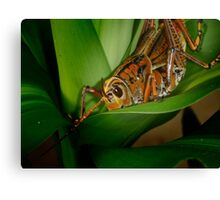 Checking out the Greenery Canvas Print
