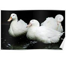 Three Ducks on a Pond Poster