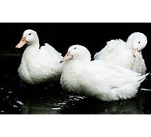 Three Ducks on a Pond Photographic Print