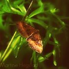 Butterfly by miamartine