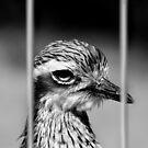 Jailbird by Marion  Cullen