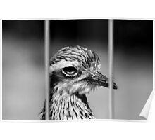 Jailbird Poster