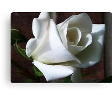 White Rose #2 Canvas Print