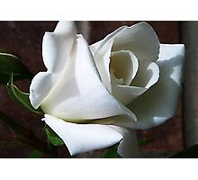 White Rose #2 Photographic Print