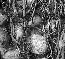 Roots and Rocks by Cathy O. Lewis