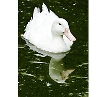 White Duck and Reflection Photographic Print