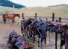 TX Saddles by pmreed