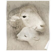 Ewe and Her Lamb Poster