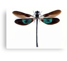 Dragonfly with green and brown wings Canvas Print