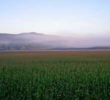 Under a blanket of fog in the early morning - Johnson, VT by PASpencer