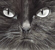 Black Cat by Drawing