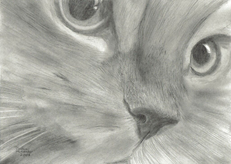 Cat Face by Drawing