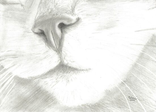 Cat Nose by Drawing