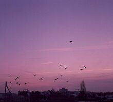 flock of birds - sunrise by rince77