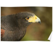 Falconry at Herstmonceux Castle Poster