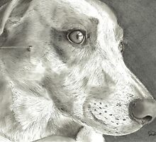 Dog Art Charcoal Drawing by Drawing