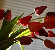 Tulips by julie101
