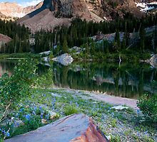 Sundial Peak Wildflowers by mikewheels