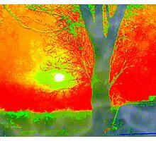 Sunrise through the tree Photographic Print