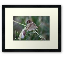 Buckeye - Just Hatched Framed Print