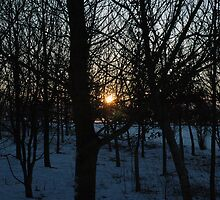 Sun Rise in the Winter Cherry Orchard by James Stevens