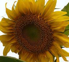 The Sun In My Garden by KelleyShiu