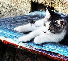 Kitty on a Cool Tin Roof by Nadya Johnson