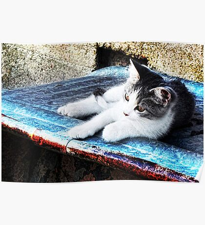 Kitty on a Cool Tin Roof Poster