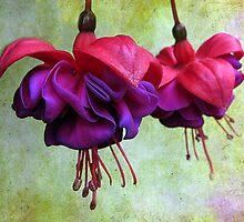 Fuchsia by Jessica Jenney