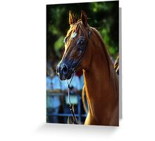 the chestnut horse Greeting Card