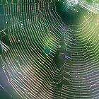 Triple Web by Johanne Brunet