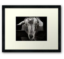 goat Framed Print
