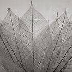 skeleton leaves by Dave Milnes
