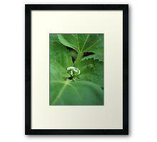 Water droplet on a leaf Framed Print