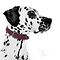 On the spot! Dalmatians - Photography and art - Must be in the Group