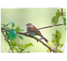Summer Sparrow Friend Poster