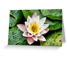 ~ Peace, Love & Enlightenment In A Pink Lotus ~ Greeting Card