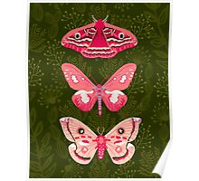 Lepidoptery No. 7 by Andrea Lauren  Poster