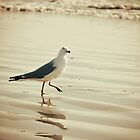 Skipping Seagull by sunrisern