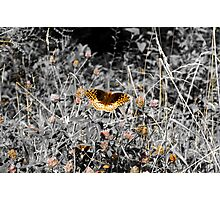 Gloden Butterfly Photographic Print