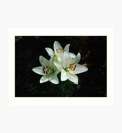 Eye-liner Lilies 2010 Art Print