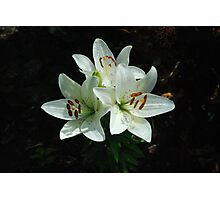 Eye-liner Lilies 2010 Photographic Print