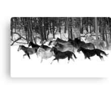 After the Blizzard 18 B&W Canvas Print