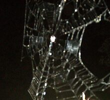 Spider in the night by Sarai