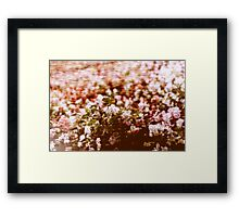 Impressionistic summer flowers blossom Framed Print