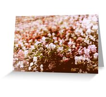 Impressionistic summer flowers blossom Greeting Card