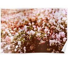 Impressionistic summer flowers blossom Poster
