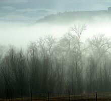 Foggy Day in Cottonwood by Darlene Wilson
