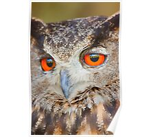 Look into my eyes - Eureasian Eagle Owl Poster